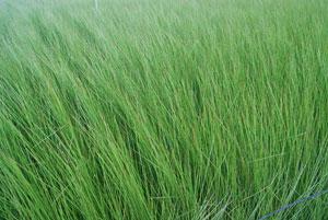 熊本県八代市の草農家訪問